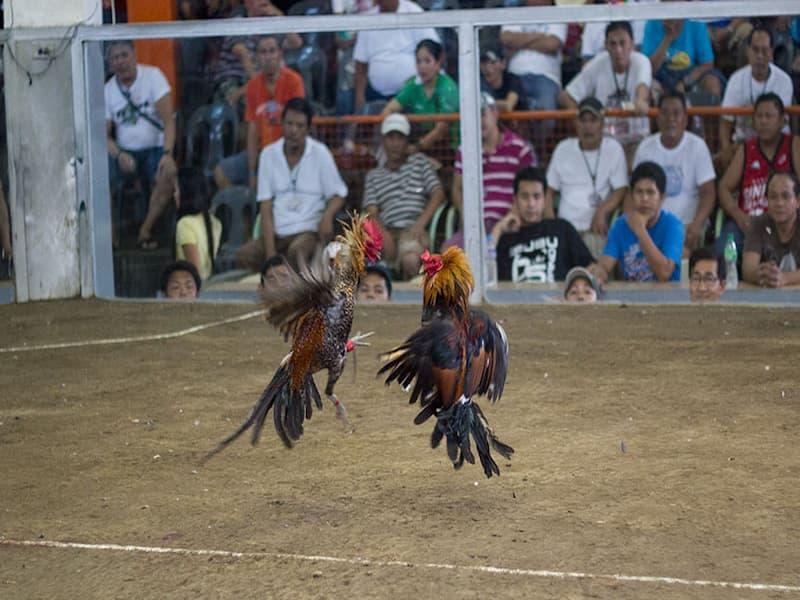 đá gà trực tiếp philippines